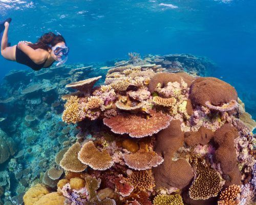 australian-great-barrier-reef-19
